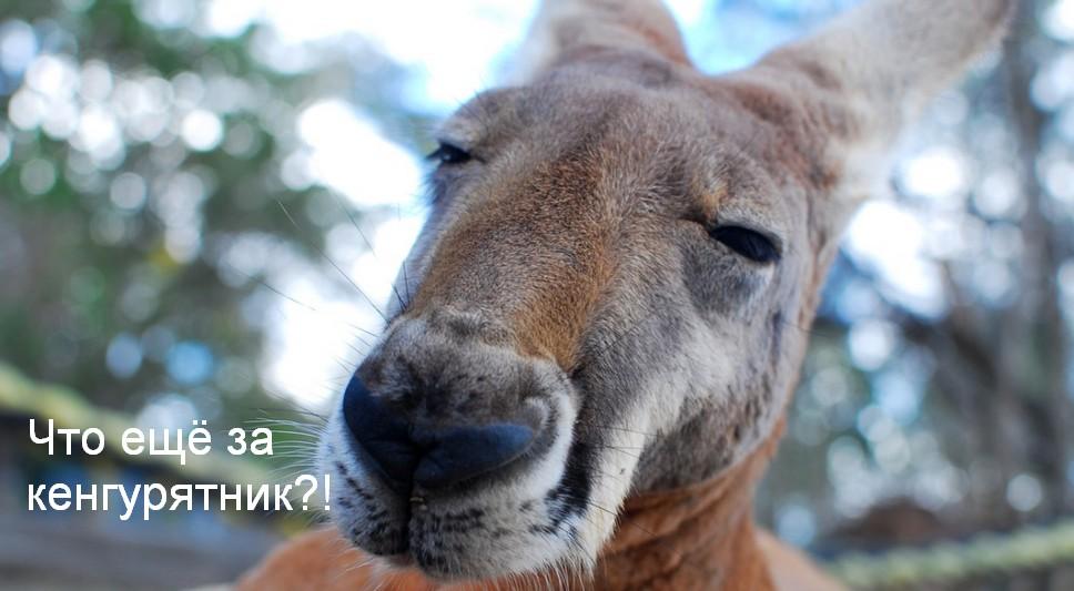 Фото про кенгурятник