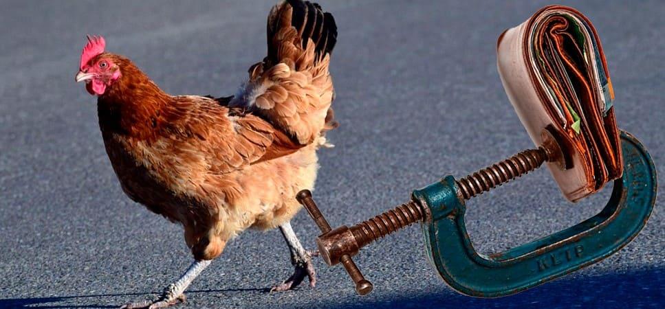 Что грозит за сбитую курицу автовладельцу